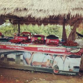 roaches in cambodia