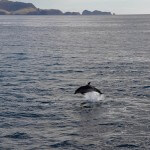 bay of islands dolphin