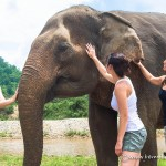The Best Way to Play With Elephants in Thailand