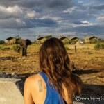 elephant camp botswana