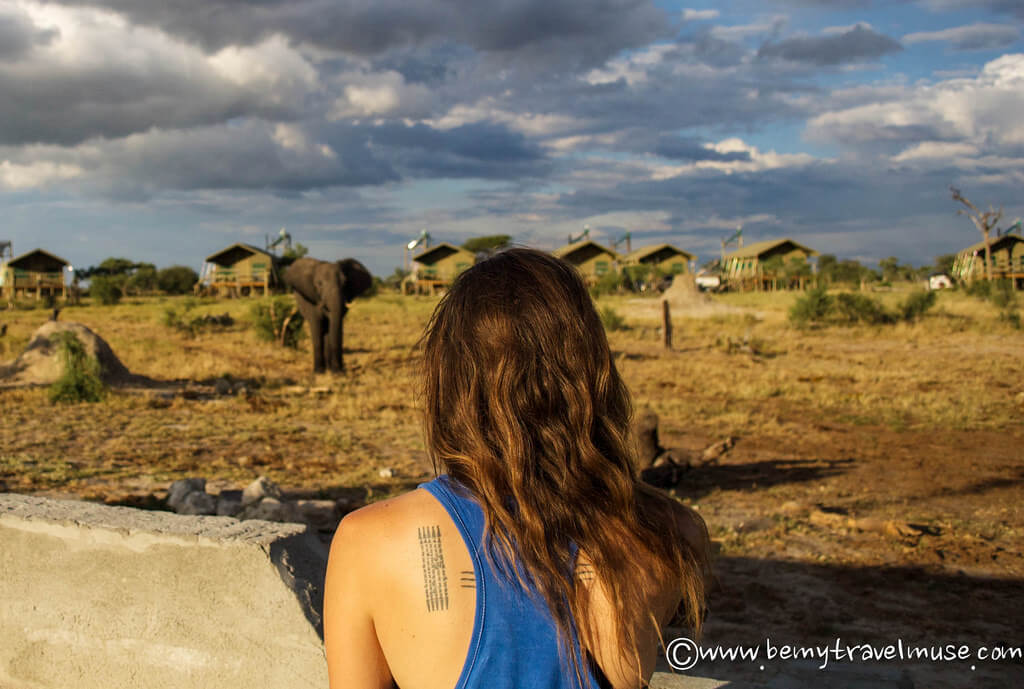 3 Best Places in Southern Africa for Safari | Be My Travel Muse www.bemytravelmuse.com