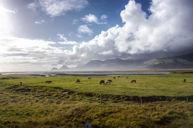 Iceland eastern fjords