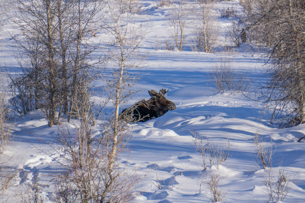grand teton national park winter