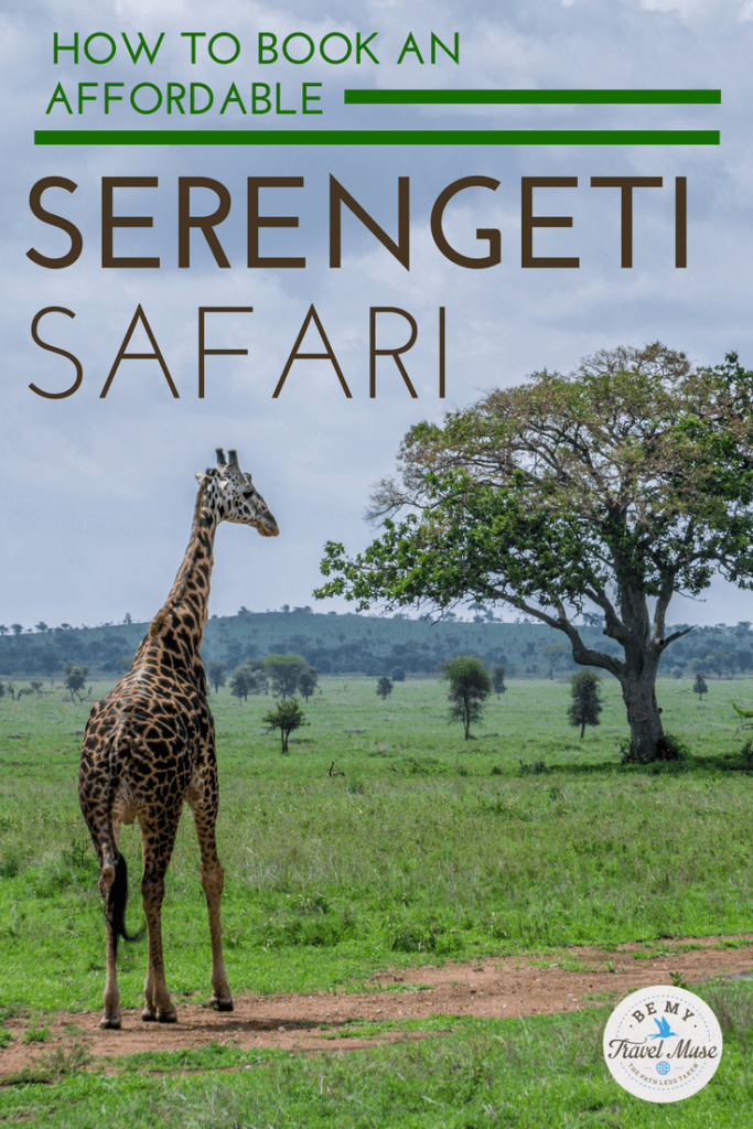 From choosing the right season, the right lodge, and the right company, here's how to save and have an amazing and affordable safari in the Serengeti