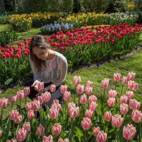 How to See the Tulips in Amsterdam