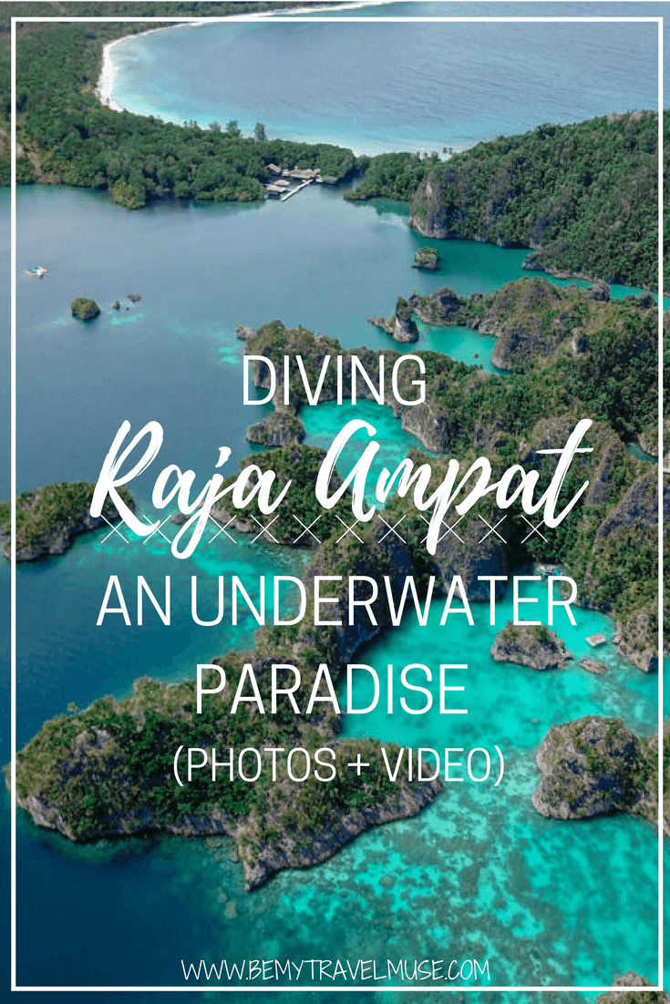 Diving raja ampat an underwater paradise - Best dive trips ...