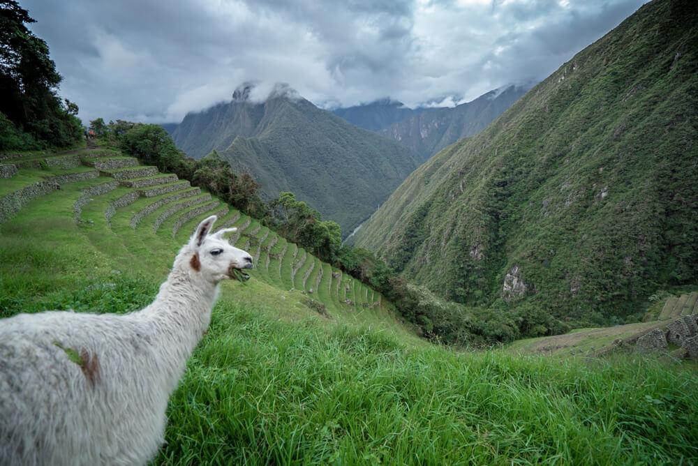 hiking inca trail
