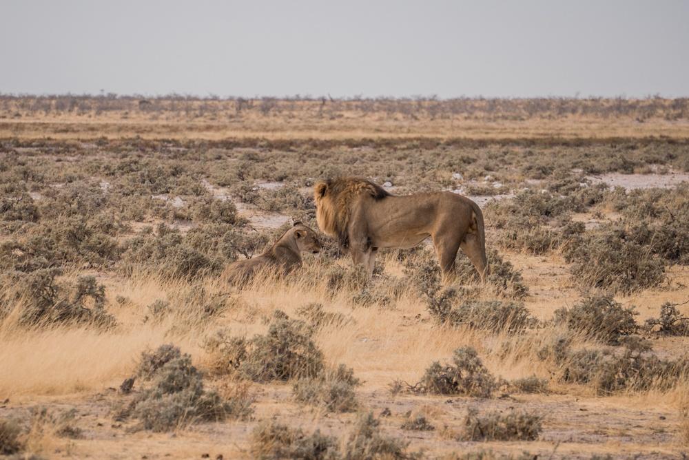 Etosha National Park namibia road trip