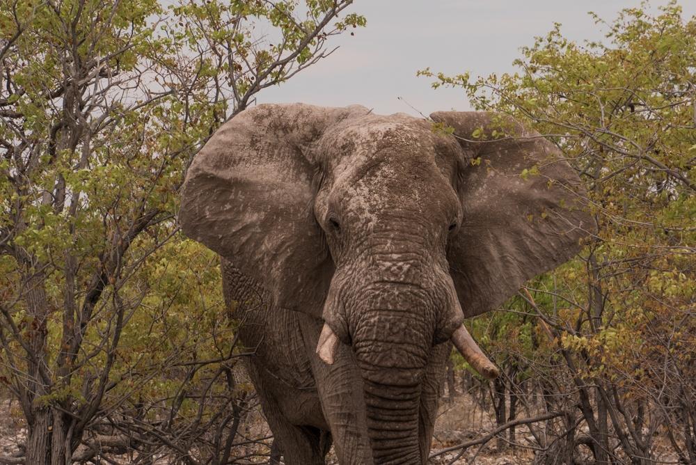 namibia road trip-9