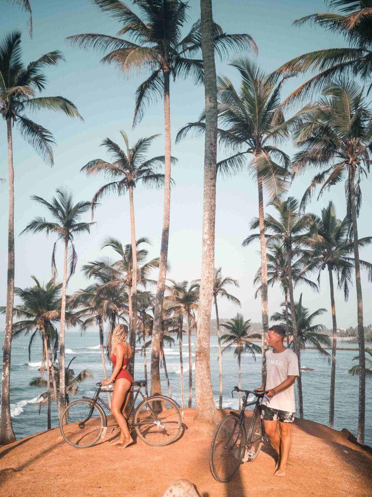 Mirissa coconut palms