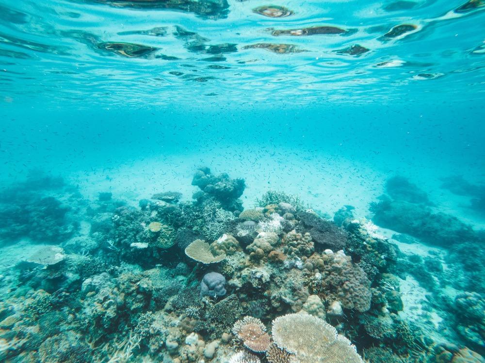 coron black island reefs