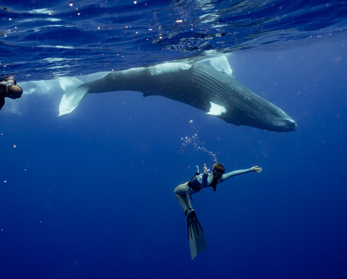 Home.fit french-polynesia-whale-swim-7 The Best Ethical Chakra Crystals