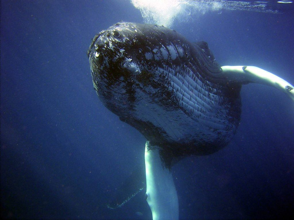 Want to Swim With Whales? Here's Where to Go