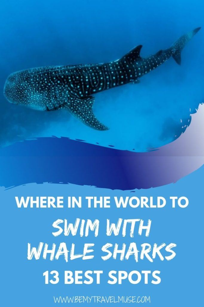 Where in the world can you swim with whale sharks ethically? Here are 13 spots around the world that you can swim with whale sharks in the wild, a bucket list item for all of the underwater adventure enthusiasts out there! #WhaleSharks