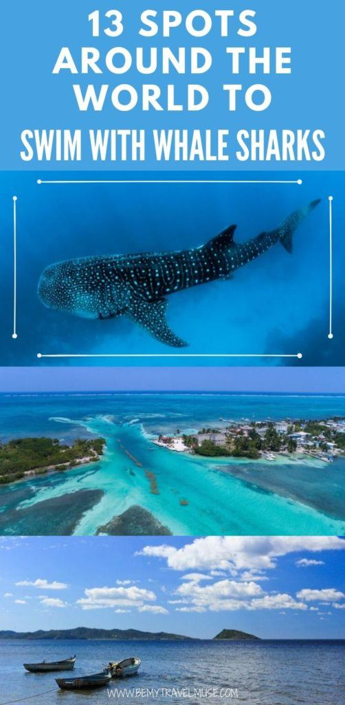 Do you have swimming with whale sharks on your adventure bucket list? Here are 13 spots around the world where you can swim with whale sharks ethically and in the wild. #WhaleSharks