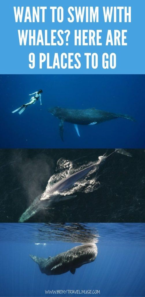 Is swimming with whales on your bucket list? Here are 9 awesome spots around the world where you can swim with whales ethically and in the wild, including Tonga, Tahiti, Western Australia, Mozambique, Norway and more. #whales #bucketlist