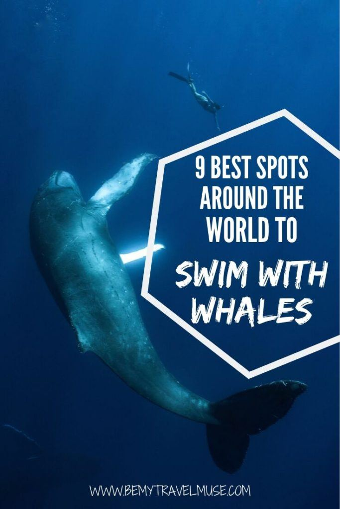 Here are the 9 best spots around the world to fulfil your dreams of swimming with whales, from sperm whales to humpbacks and orcas! These destinations have ethical operations that allow visitors to swim with whales in the wild. Click to find out where they are, and what you can expect from a whale swim trip. #bucketlisttravel