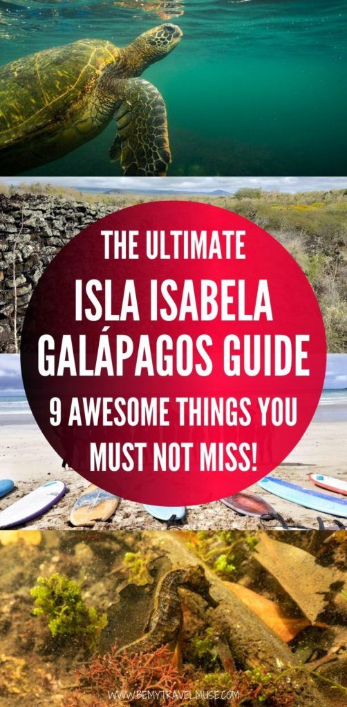 Isla Isabela in the Galápagos is the biggest island in the group, with amazing wildlife including seahorses, sea lions, turtles, manta rays, sharks, and more. Click to read the 9 awesome things you must not miss when in Isla Isabela in Galápagos, plus essential information on accommodation, food and transportation #Galapagos
