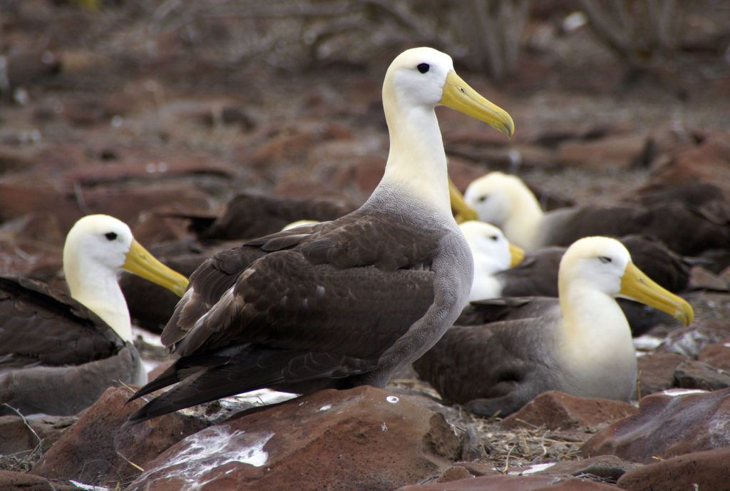 30 Galapagos Islands Animals and Where to Find Them