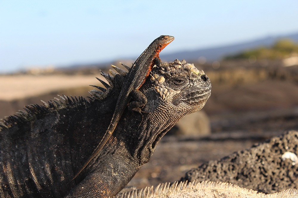 30 Animals of the Galapagos and Where to Find Them