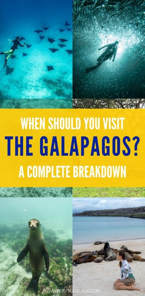 Planning a trip to the Galapagos islands? Here is a complete breakdown on the best month to visit the Galapagos islands, with information on the weather, prices and wildlife availability each month to help you decide when to go! #Galapagos