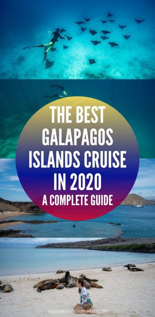 Click for the best Galapagos islands cruise guide for 2020! This guide includes tips on picking the right boat company, an example itinerary and insider tips for solo travelers. If you are planning a trip to Galapagos, be sure to check this guide out! #Galapagos