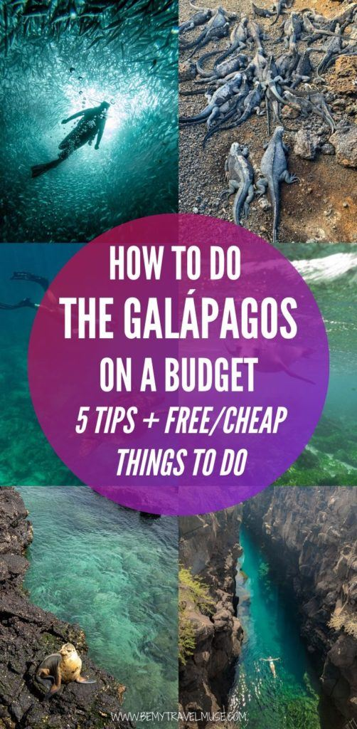 Here are 5 tips to help you travel in the Galapagos on a budget, plus a list of free and cheap things to do. #Galapagos
