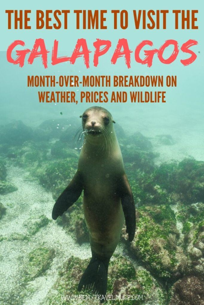 When is the best time to visit the Galapagos islands? Here's a complete month-over-month breakdown with information on the weather and precipitation, prices and booking, as well as wildlife availability to help you make a decision. #Galapagos