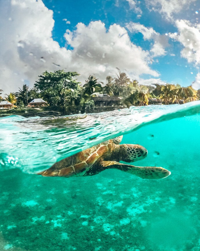10 top things to do in Samoa - Sea Turtle