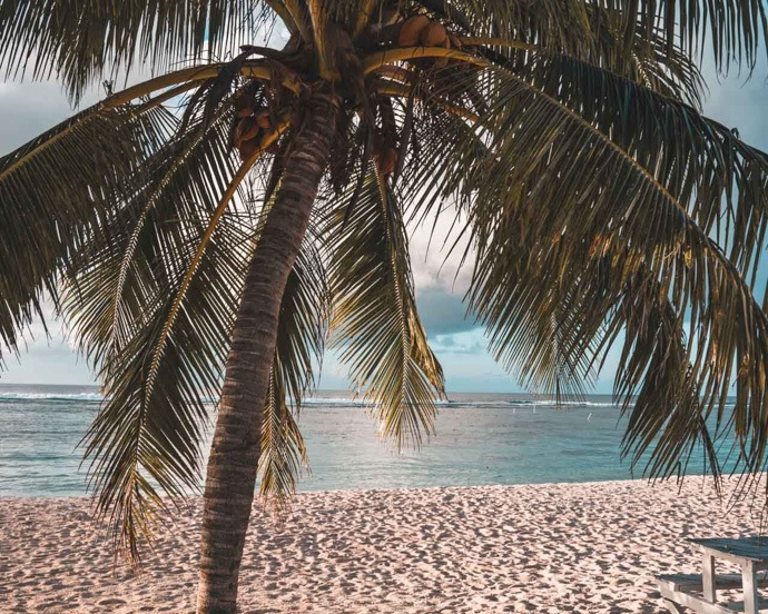10 top things to do in Samoa - Palm tree on sandy beach in Savai'i