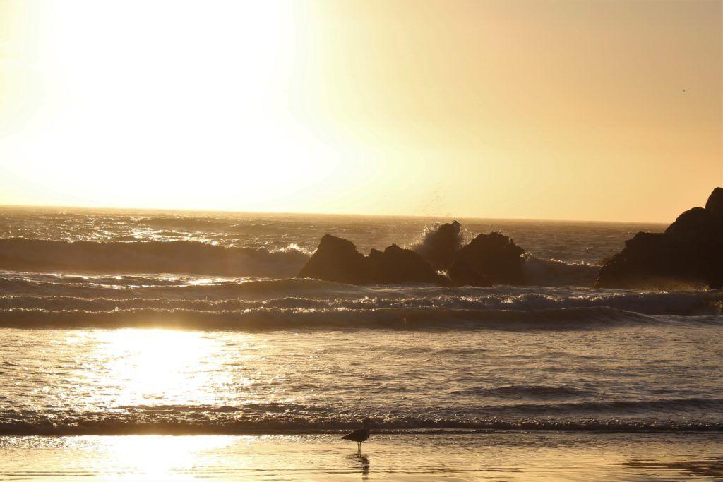 golden hour, ocean, rocks, bird