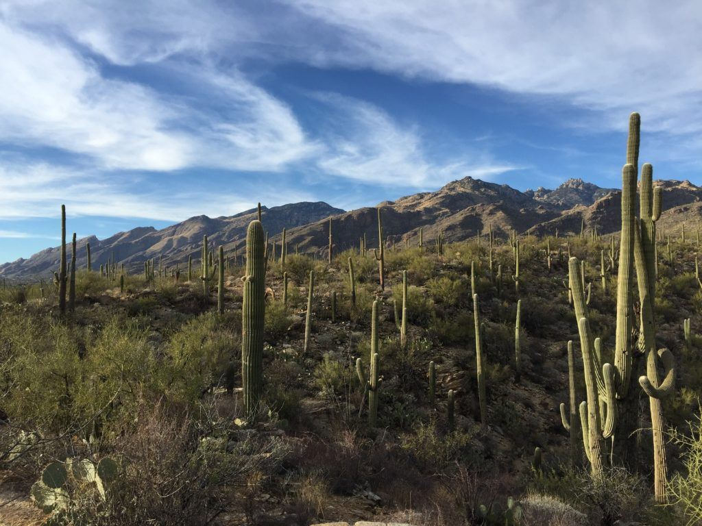 Camping in Arizona: Where to Go & What to Know