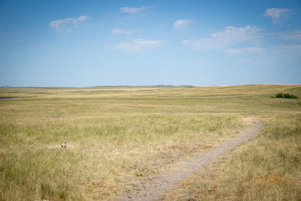 Badlands National Park Prairie Dog Town