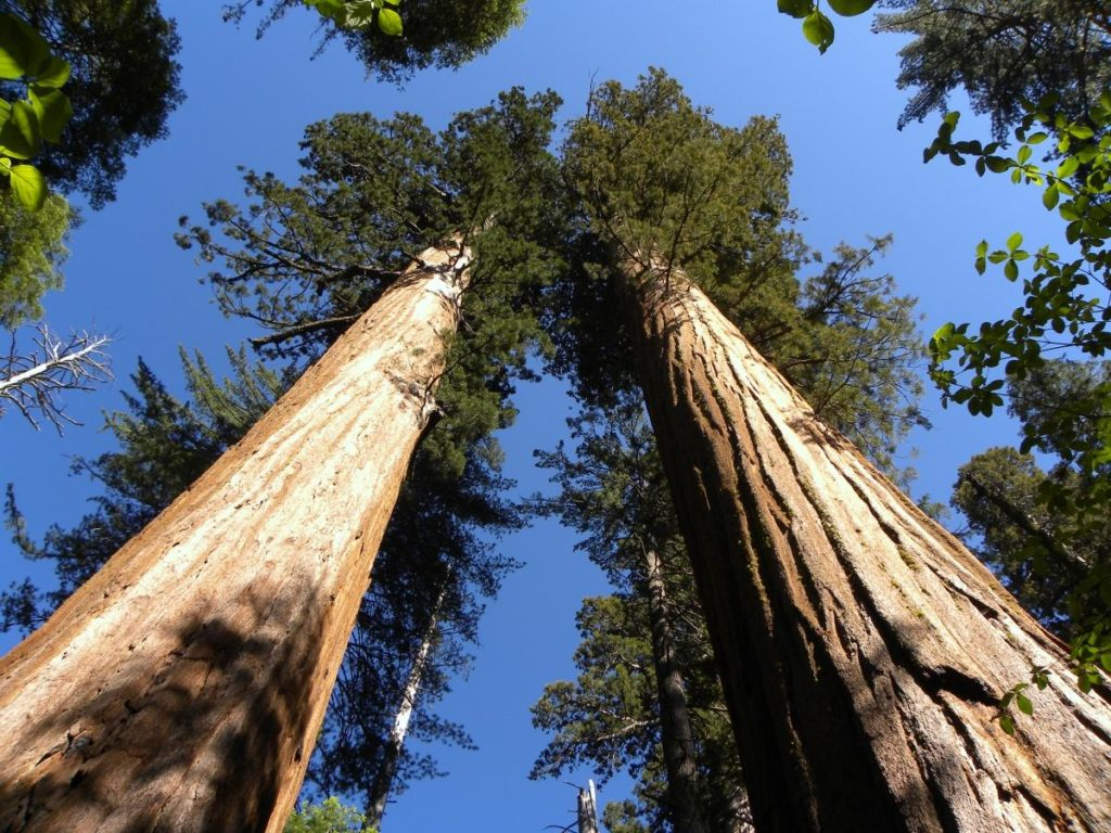 Connect with the Great Outdoors on this Solo NorCal Nature Road Trip