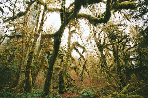 hoh rainforest national parks trip