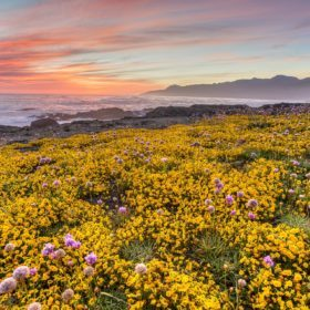 The Best Places to See California's Wildflowers & Super Blooms