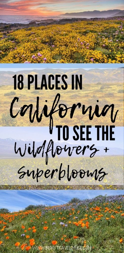 Excited to see the wildflowers and superblooms in California? Here are 18 perfect spots across Northern California, Bay Area, Central Coast, Eastern Sierra, Mojave Desert, and Southern California to see them! Click to read the detailed list and start planning your trip now. #Superblooms #California