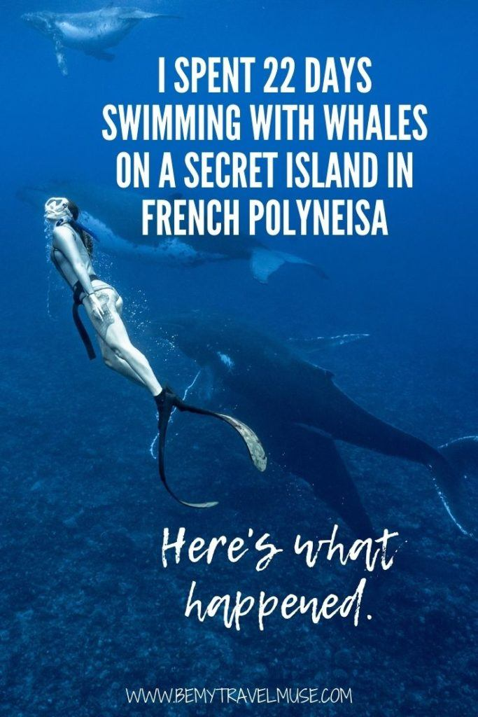 Have you dreamt of swimming with whales in their natural element? I spent 3 weeks on a secret island in French Polynesia, with most of my time spent swimming with wild humpback whales in the ocean, and here's what happened, PLUS how you can come along next year! #Whales #FrenchPolynesia