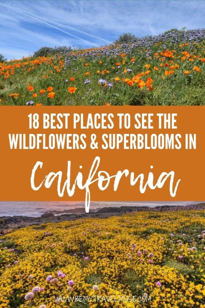Where are the best places in California to see the wildflowers and superblooms? Here are 18 perfect spots in Northern California, Bay Area, Central Coast, Eastern Sierra, Mojave Desert, and Southern California to see the wild flowers and super blooms. Click to see the list now! #California #Superblooms
