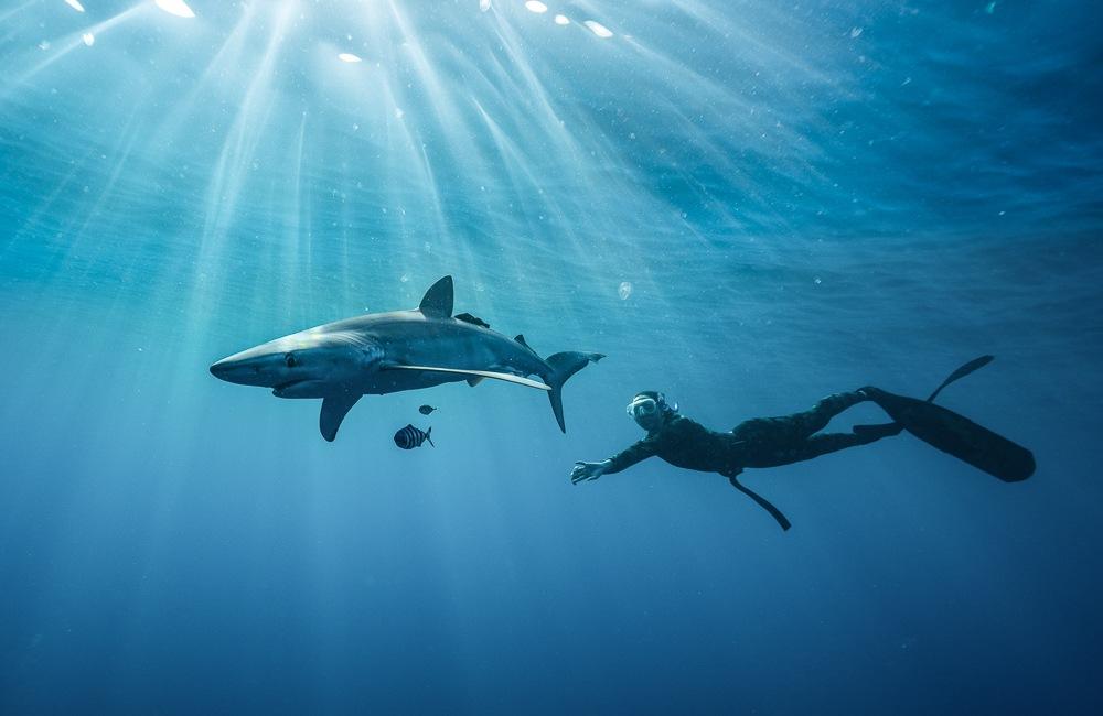 cabo san lucas shark swimming