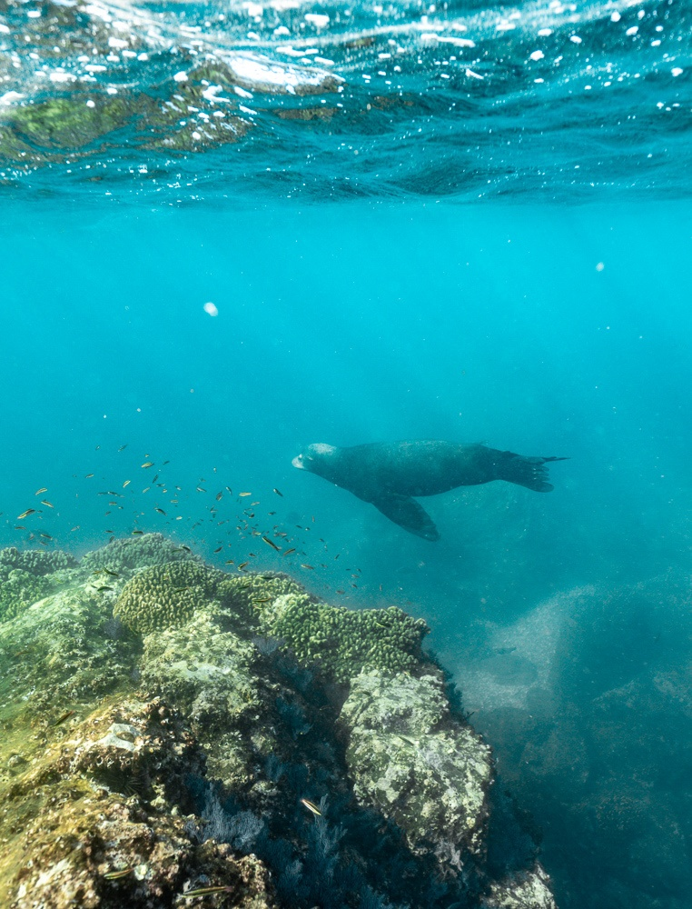 isla ceralvo sea lions