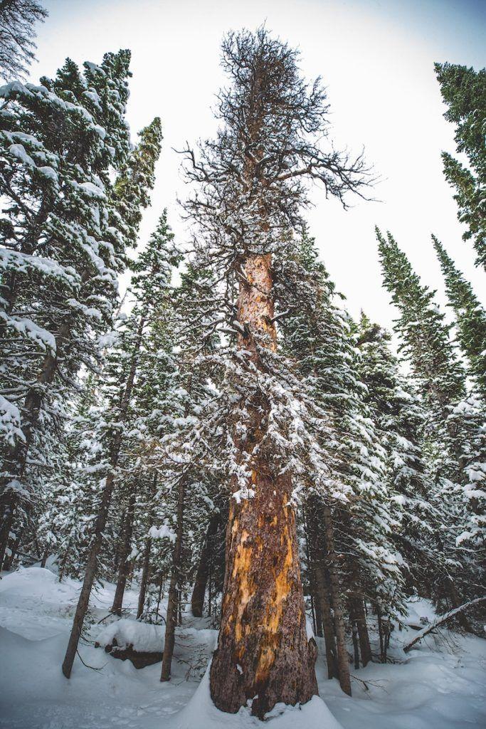 rocky mountain national park winter
