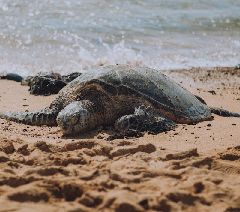 Home.fit poipu-sea-turtles 20 of Kauai's Best Things to Do