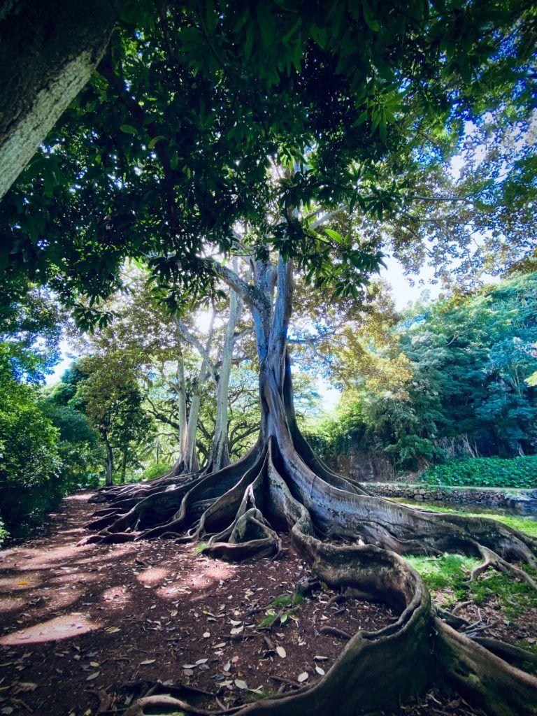 Home.fit things-to-do-in-maui-kauai-oahu-768x1024 20 of Kauai's Best Things to Do