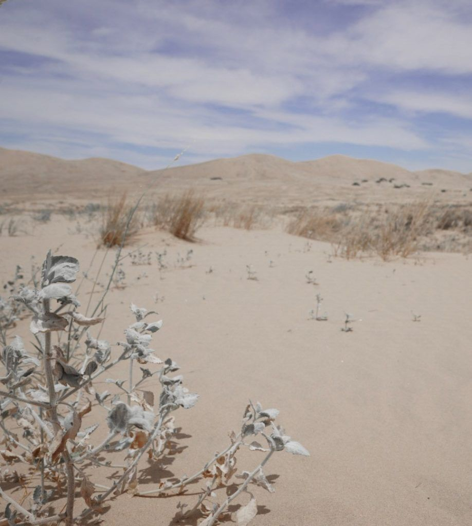 The Kelso Dunes at Mojave National Preserve.
