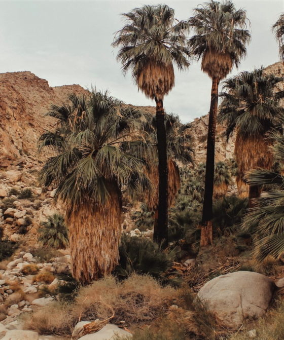 Hiking trails in Joshua Tree National Park.