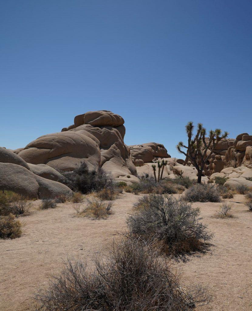 The desert landscape in Joshua Tree.