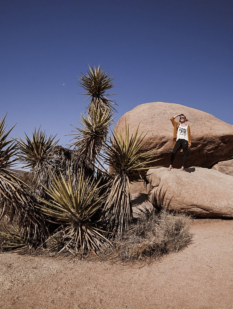 What To Do in Joshua Tree Nationwide Park